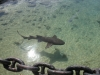 Sharks are in a lagoon