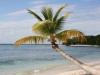 Perfect Palm Tree