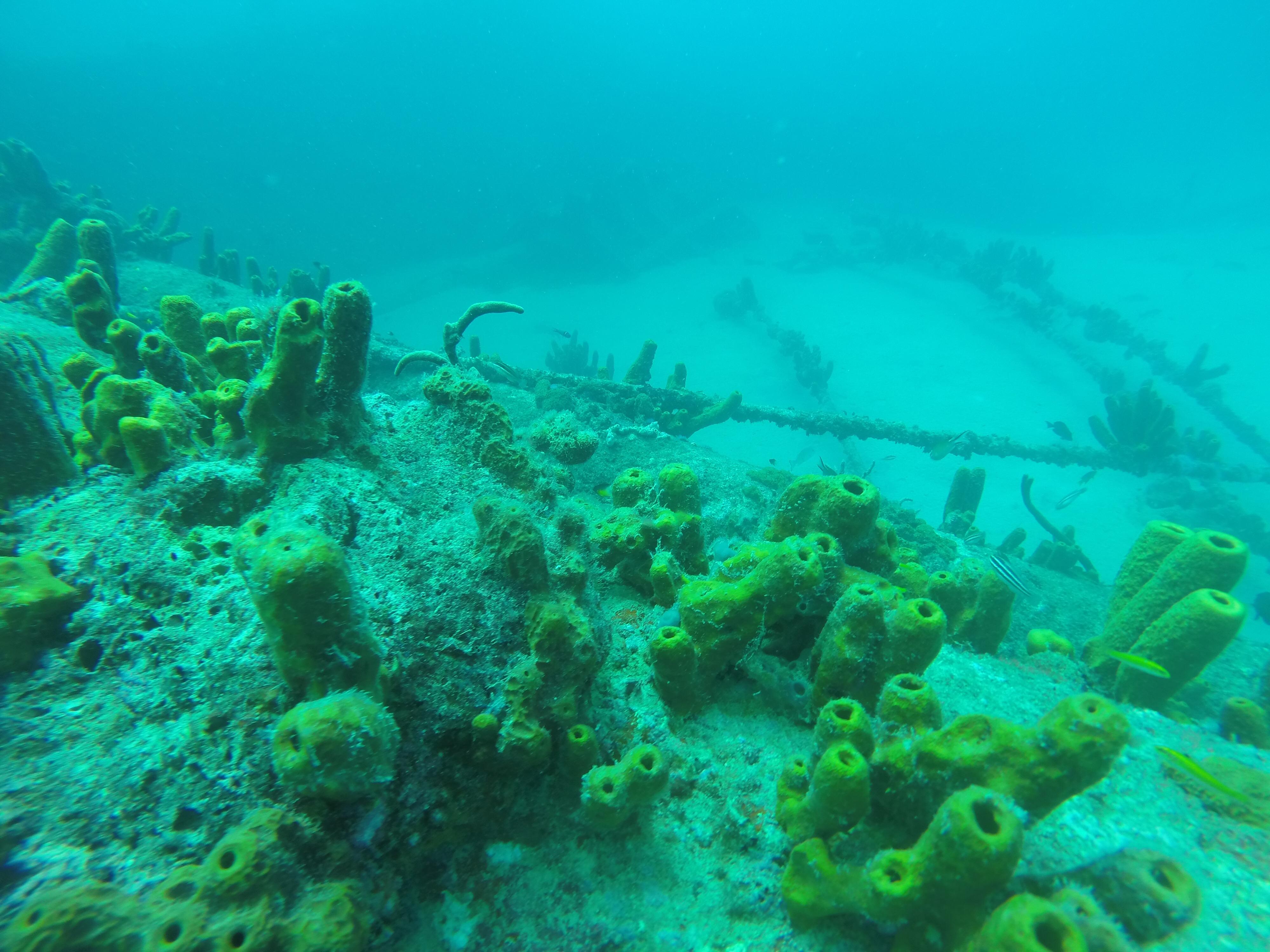 Aruba wreck dive