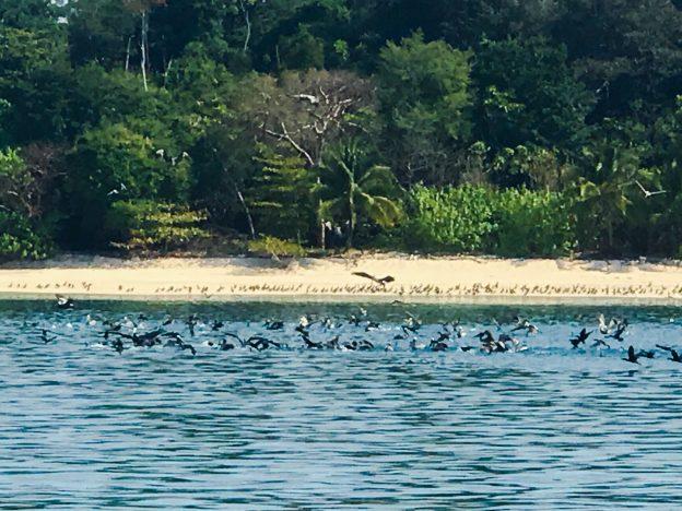 Birds enjoying a day at the beach