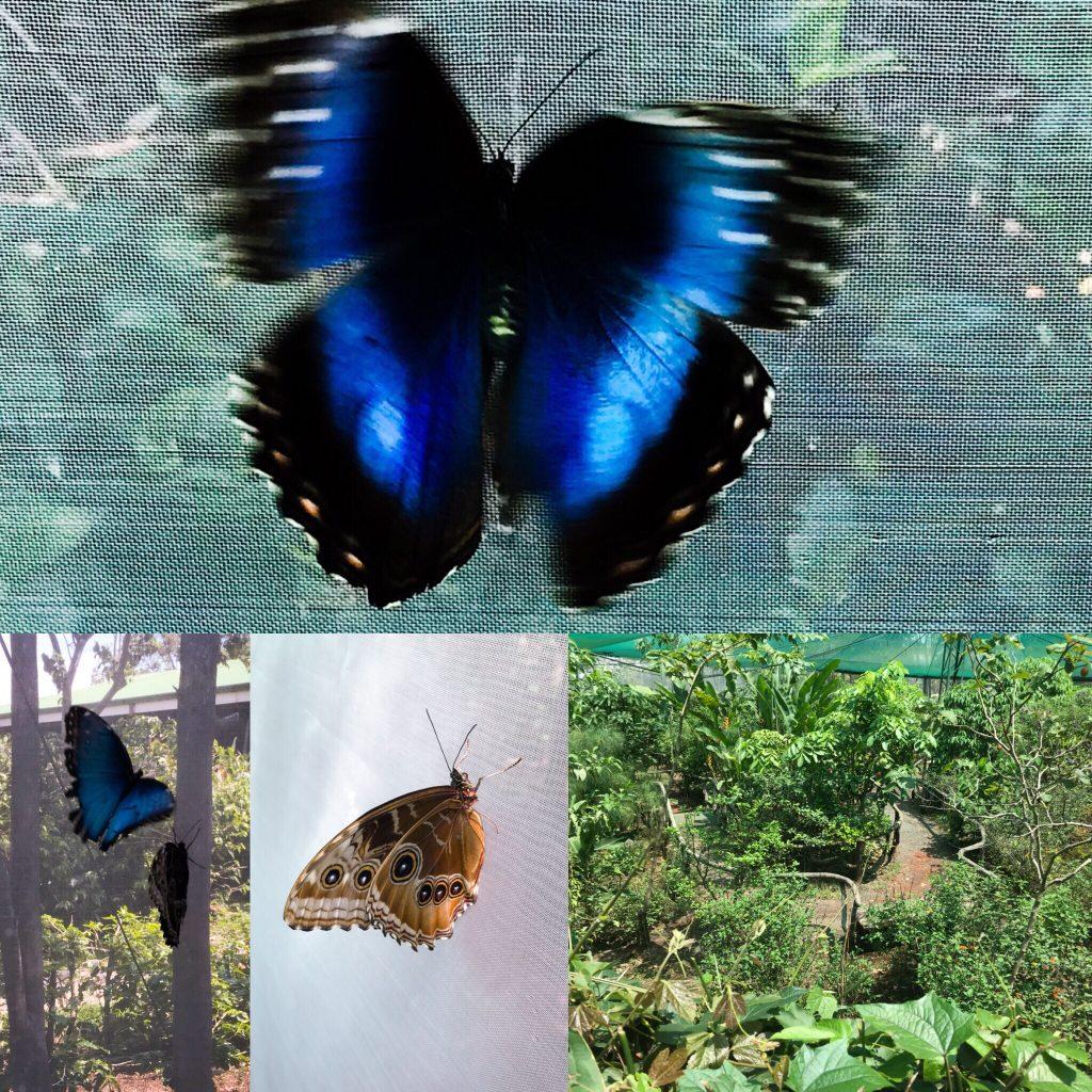 Butterfly Sanctuary at Doka