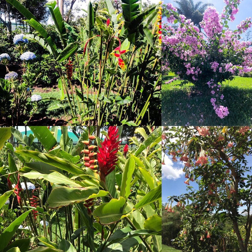 Doka Coffee Plantation Flora
