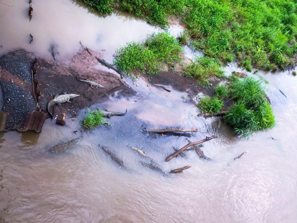 https://news.co.cr/costa-rican-mayor-taken-task-dangerous-crocodile-viewing-bridge/62990/
