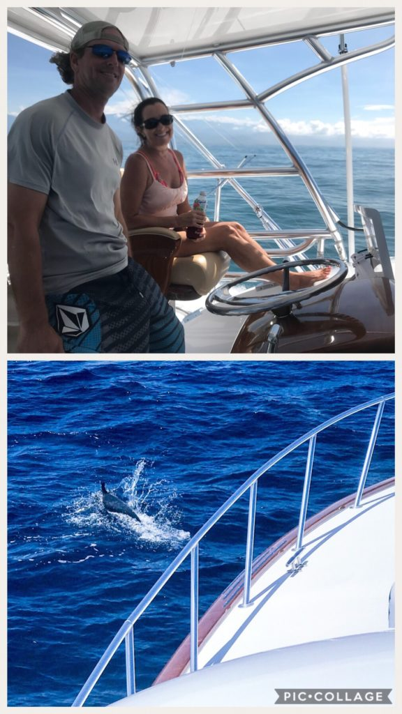 Dolphin Sighting