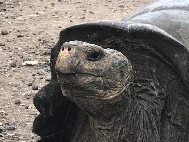 Tortoise or Tortuga
