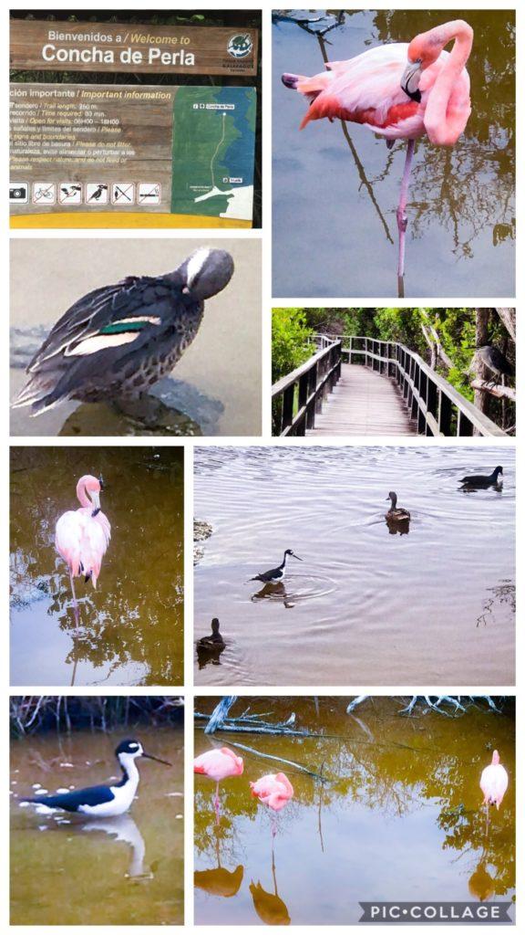 Concha de Perla Bird Paradise