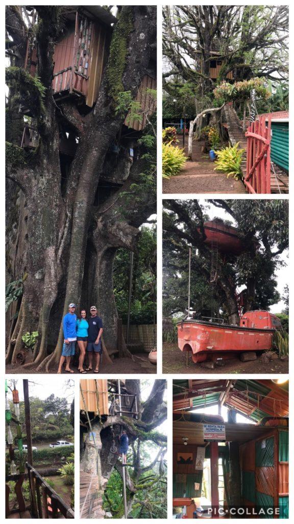 The Tree House - El Ciebo