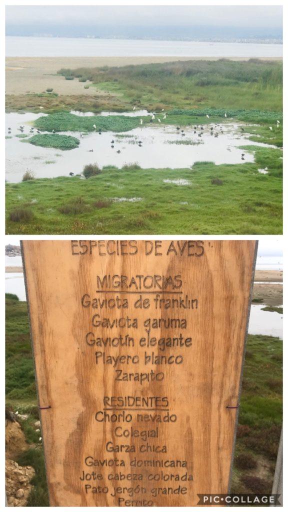 Seagull Preserve