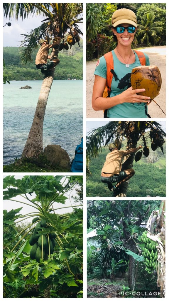 Coconut Hunting
