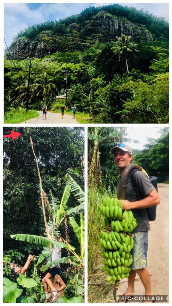 Banana Hunting