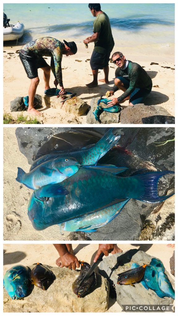 Spear Fishing with Herve